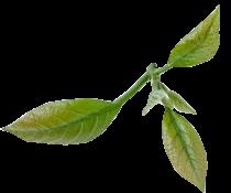 leaf2-1_210x175