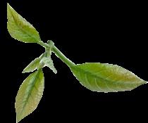 leaf2-2_210x175